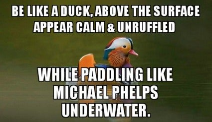 duck paddling and calm